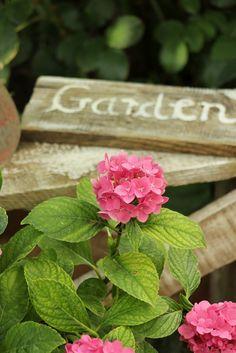 Blue Hortensia: U hladu,pod krošnjom katalpe. Pink Garden, Dream Garden, Summer Garden, Country Cottage Garden, Cottage Gardens, Castle Gardens, Pink Hydrangea, Hydrangea Garden, Hydrangeas