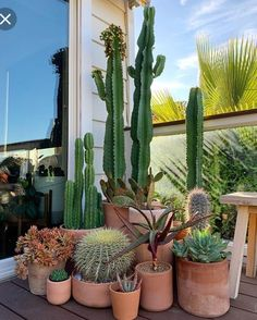 Terrakotta-Kaktus-Sammlung im Freien art garden indoor plants Cactus House Plants, Indoor Cactus, House Plants Decor, Cactus Decor, Plant Decor, Garden Plants, Indoor Plants, Cactus Cactus, Cactus Garden Ideas