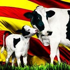 Fem colla amb la Diada Nacional de Catalunya #totsfemcolla