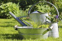 Lugares inusitados também podem abrigar sua horta -