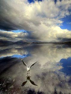 J'aime bien cette photo car je vois un oiseau qui survole l'eau se qui donne une image inversé du ciel et en même temps de notre monde. Et ça inspire la capacité pour les oiseaux de pouvoir être des animaux terrestres et aériens se qui leur permettent une vue différente sur le monde.