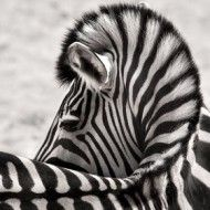 Life as a Medical Zebra with Ehlers-Danlos Syndrome
