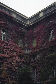 Burgundy Ivy, Berlin, Germany photo via joyce Burgundy Aesthetic, The Secret History, Looks Style, Porches, Color Inspiration, Creative Inspiration, Architecture Design, World, Pictures