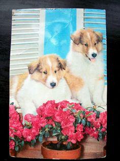 Collie Dog Puppies Vintage Squeaker Novelty Postcard Post Card