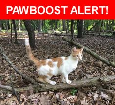 Is this your lost pet? Found in Chicago, IL 60656. Please spread the word so we can find the owner!  White & red female cat.  Friendly, followed us home from the forest preserve.  Has a small lump on her stomach. No chip, about 2 year old.  Near W Foster Ave & N East River Rd