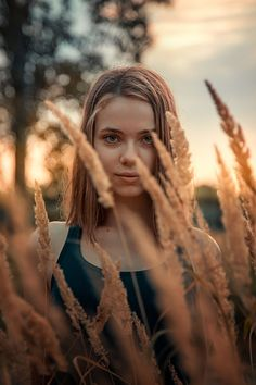 golden summer (by Andrew Vasiliev)