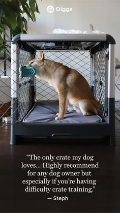 Animals And Pets, Baby Animals, Cute Animals, Collapsible Dog Crate, Ga In, Dogs And Puppies, Doggies, Dog Care, Mans Best Friend