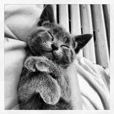 Cats_of_instagram on Instagram #kitten,  #cat,  #cats