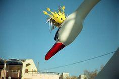Photography by SP Kirilov: swan king Agat 18 Kodak Gold, Lomography, Swan, Swans