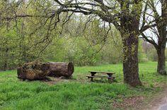 Fénykép Outdoor Furniture, Outdoor Decor, Park, Parks, Backyard Furniture, Lawn Furniture, Outdoor Furniture Sets