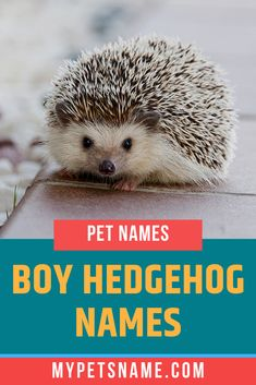 If you've just brought a tiny little boy hedgehog name and are looking for boy hedgehog names, how about Hulk? A funny and ironic take on their little size. Check out our list for more ideas. Cute Pet Names, Funny Names, Boy Names, Hedgehog Names, Hedgehog Pet, Ancient Egyptian Cities, Norse Names, Happy Names, German Names
