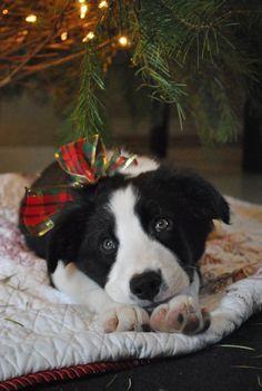 Merry Christmas Darling~ #Christmas Doggy with Tartan Bow - #LadyLuxuryDesigns