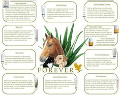 Forever Living is the largest grower and manufacturer of aloe vera and aloe vera based products in the world. As the experts, we are The Aloe Vera Company. Forever Aloe, Forever Living Aloe Vera, Forever Living Products, Forever Freedom, Clean9, Forever Living Business, Chocolate Slim, Aloe Vera Gel, Pet Health