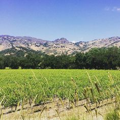 Pin for Later: 11 Creative Vegas Alternatives For Your Bachelorette Party Have a Wine Country Weekend Hoping to keep things small and simple? Wine tasting makes for a fun day trip or a relaxing, low-key weekend with your closest friends.