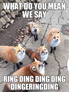 Fox Ish