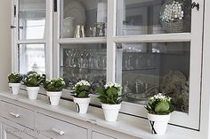 decorating with miniature succulents in numbered pots