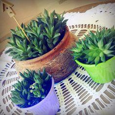 Mhilka Diniz #jardinagem #jardim #DIY #succulents #cacti #cactus #suculentas
