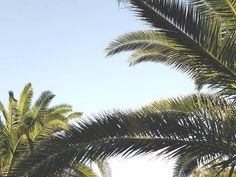 Palms • Bye summer, we're going to miss you