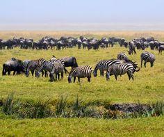Top 5 Tanzania wildlife experiences courtesy of @audleytravel http://www.aluxurytravelblog.com/2016/07/23/top-5-tanzania-wildlife-experiences/