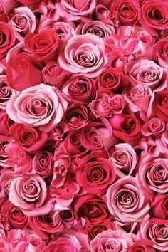 ピンクの待ち受け画像。 の画像|素敵なロリィタ目指してますッ