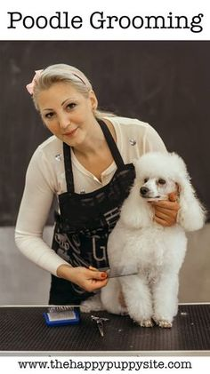 Complete Guide To Proper Poodle Grooming. Looking At How To Groom A Poodle. The Different Styles, And Tools That You Will Need To Get The Job Done Right. Dog Grooming Tips, Poodle Grooming, Grooming Salon, Poodle Cuts, Puppy Cut, French Poodles, Standard Poodles, Tea Cup Poodle, Bulldog Breeds