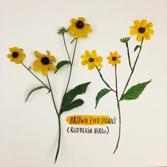 In abundance right now these yellow Brown Eyed Susan's. #botanical #flora #flowersofnorthamerica #canada #ontario #paint #goauche