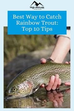 They are predators, they are abundant, and they are opportunistic feeders. This is why trout is one of the top four sought-after game fish in the country. The more information you have in addition to knowing the top tips and techniques will help you land that Rainbow Trout. So, if you want that trophy Rainbow Trout then read on and learn the Best Way to Catch Rainbow Trout: Top 10 Fishing Tips. Salmon Eggs, Trout Fishing Tips, The Bait, Rainbow Trout, Best Fishing, Game, Country, Top, Rural Area