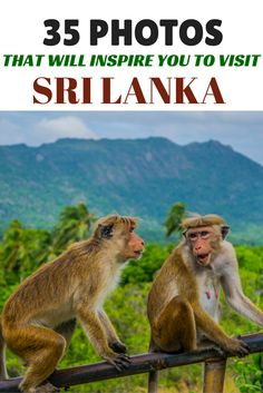 Sri Lanka is an amazing country with something to offer everyone.  From the amazing landscape, pristine beaches, and delicious food -- you'll definitely be making repeat visits.