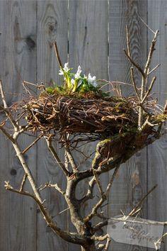 Ein Nest aus Birkenr