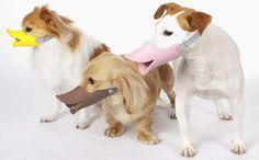 """Bozal para perros """"ovíparos"""" » No Puedo Creer"""