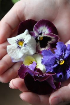 Learn how to press flowers from the garden with a few simple steps.