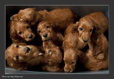 pile of Irish