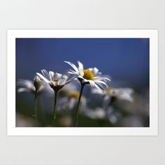Daisies 3610 Art Print by metamorphosa - $22.88