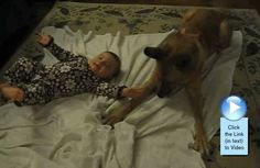 Dog self control around baby tested. See #video  http://www.babyvideooftheweek.com/videos/view/3039  #‎bvotw