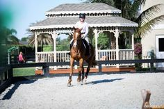 An Exercise For Horses That Are Eager At The Jumps Horse Exercises, Hunter Jumper, Grand Prix, Equestrian, Pergola, Outdoor Structures, Horses, Heels, Animals