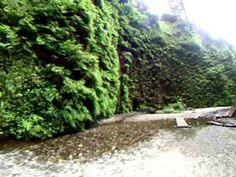 Travel Destination for road trip along northern California coastal route: Fern Canyon.