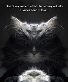 No, Mr Bond, I Expect You To Feed Me, Then Die