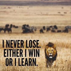 I never lose. Either I win or I learn.- I never lose. Either I win or I learn. I never lose. Either I win or I learn. Motivacional Quotes, Quotable Quotes, Great Quotes, Quotes To Live By, Inspirational Lion Quotes, Happy Quotes, Choir Quotes, Inspirational Scriptures, 2015 Quotes