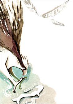 illustration of osprey, charlene chua toronto #canadabird