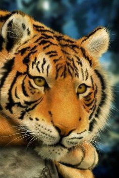 paintings, nature, animals, digital, tigers, photography