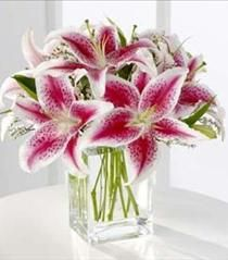 FTD Pink Stargazer Lily Bouquet