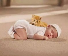 Very interesting post: TOP 50 Funny Cats and Kittens Pictures.сom lot of interesting things on Funny Animals, Funny Cat. Animals For Kids, Cute Baby Animals, Animals And Pets, Funny Animals, Funny Kids, Cute Kids, Cute Babies, Cute Kittens, Cats And Kittens