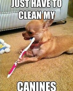Tomorrow is the last day to schedule your pets dental cleaning with the dental month discount! Were scheduling appointments clear into March so call the hospital today! Dental Assistant Humor, Dental Hygiene, Dental Health, Dental Humour, Nurse Humor, Oral Health, Dental Life, Dental Art, Humour Weekend