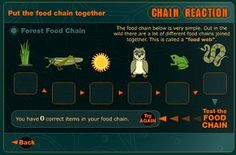Students create a virtual food chain using this website. This could be used before assessment as a final independent activity. Third Grade Science, Mad Science, Middle School Science, Science Lessons, Teaching Science, Science Activities, Life Science, Science And Technology, Science Ideas