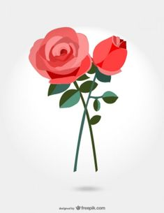 Roses vector illustration