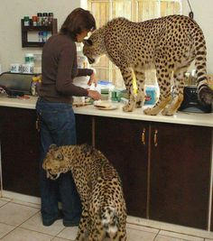 I want to be her!!!!    she works in a sanctuary for orphaned big cats