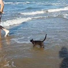 gif~ kitty giving the beach experience a try. no impressed =) Funny Animal Videos, Cute Funny Animals, Funny Animal Pictures, Cute Baby Animals, Animals And Pets, Funny Cats, I Love Cats, Crazy Cats, Cool Cats
