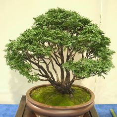 BONSAI-EXHIBIT-01 | by enzym
