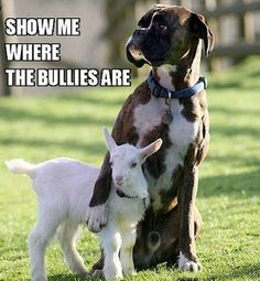 Cute animal pictures: 100 of the cutest animals! - Cute animal pictures: 100 of the cutest animals! Love My Dog, Puppy Love, Funny Animal Memes, Funny Animals, Cute Animals, Animal Humor, Animal Quotes, Dog Memes, Funniest Animals