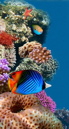 You are in the right place about peces tropicales Tropical fish Here we offer you the most beautiful pictures about … Life Under The Sea, Under The Ocean, Sea And Ocean, Underwater Creatures, Underwater Life, Ocean Creatures, Colorful Fish, Tropical Fish, Beautiful Fish
